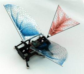 Робот-таракан научился летать